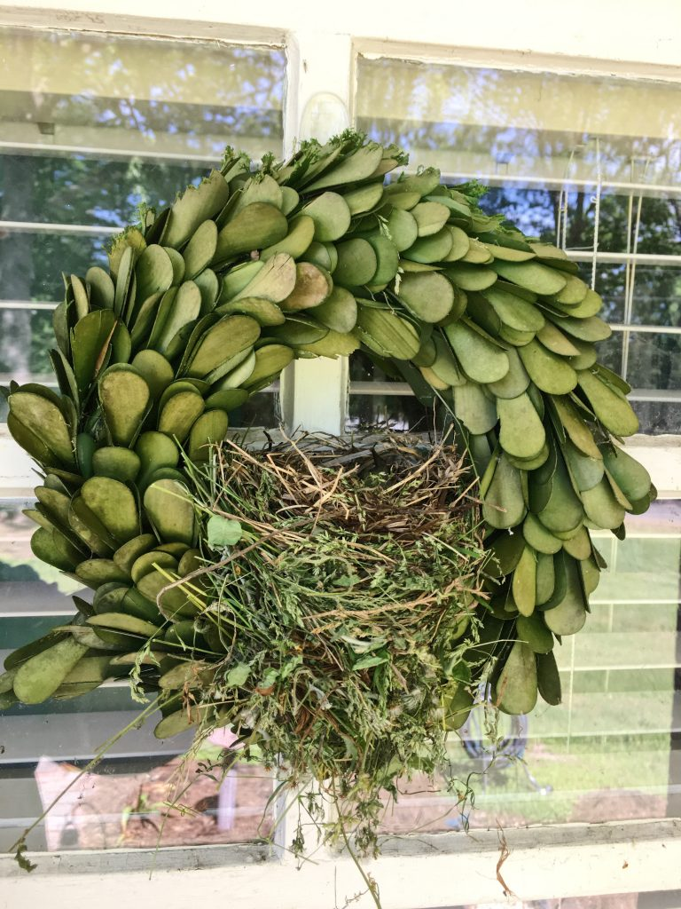 house finches #housefinch #eggs #flyawayhome #birdhouse #nesting #fairyhouse #fairies #birdwatching #birdwatch2019 #target #smithandhawkin