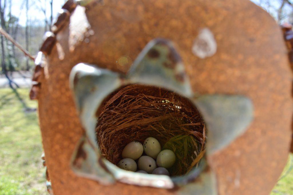 house finches #housefinch #eggs #flyawayhome #birdhouse #nesting #fairyhouse #fairies #birdwatching #birdwatch2019